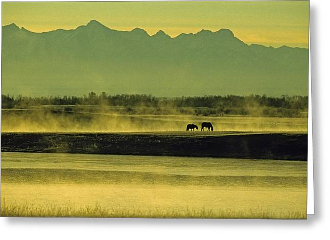 Silhouettes Of Horses Greeting Cards - Horses Graze In Morning Mist On A River Greeting Card by Gordon Wiltsie