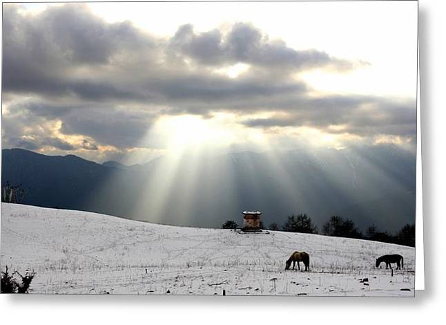Snowy Evening Greeting Cards - Horses Grazing In Field In Himalayas At Greeting Card by Axiom Photographic