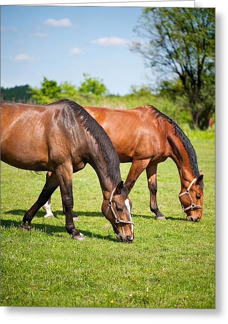 Pastureland Greeting Cards - Horses grazing Greeting Card by Marta Holka