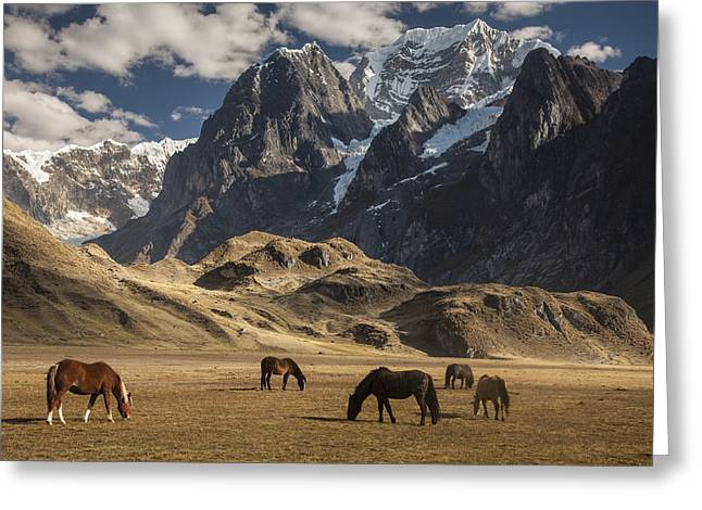 Mountains And Lake Greeting Cards - Horses Grazing Under Siula Grande Greeting Card by Colin Monteath