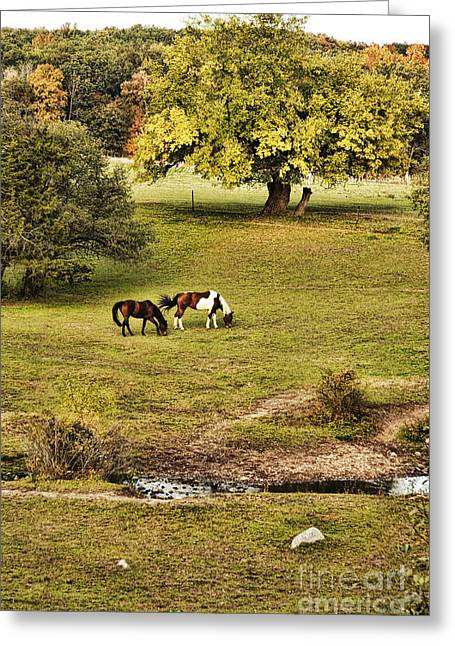 Horse Farm Greeting Cards - Horses Greeting Card by HD Connelly