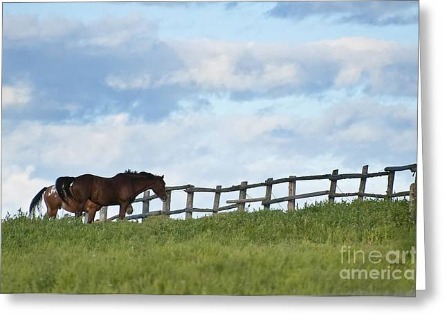 Horse Photography Greeting Cards - Horses In Field Greeting Card by Michael Cummings