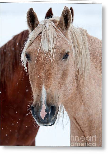 Theria Greeting Cards - Horses in Snow Greeting Card by Mark Newman and Photo Researchers