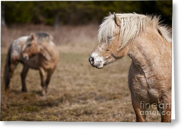Nature Photograph Greeting Cards - Horses Greeting Card by Michael Cummings