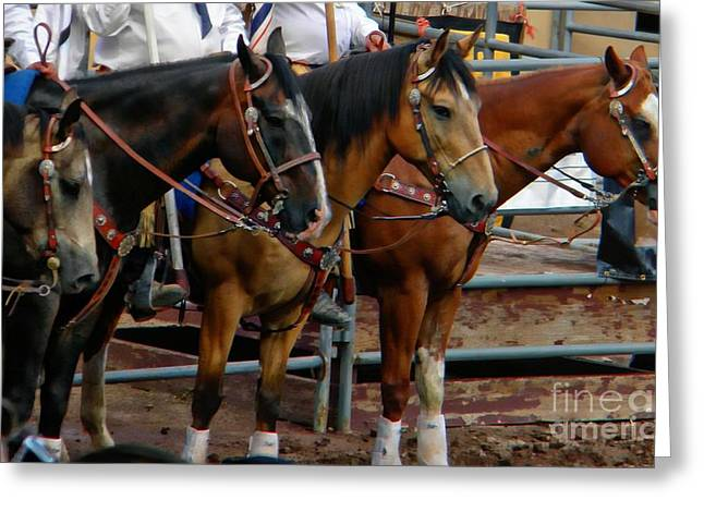 Horses Greeting Card by Michelle Frizzell-Thompson