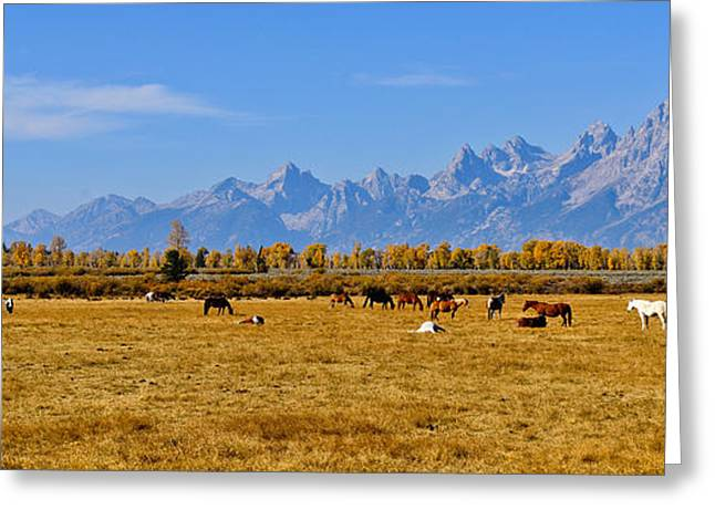 Grand Tetons Greeting Cards - Horses on the Plain Greeting Card by Greg Norrell