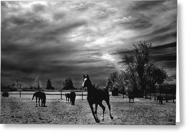 Surreal Photography Greeting Cards - Horses Running Black White Surreal Nature Landscape Greeting Card by Kathy Fornal