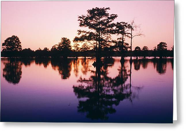 Silhouettes Of Horses Greeting Cards - Horseshoe Lake At Dusk Greeting Card by Bilderbuch