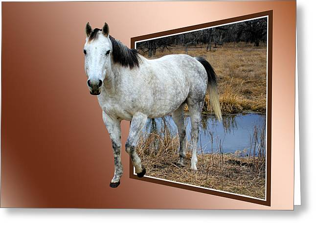 Escape Mixed Media Greeting Cards - Horsing Around Greeting Card by Shane Bechler