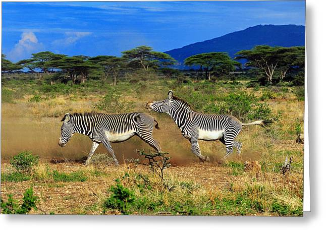 Horsing Around Greeting Card by Tony Beck