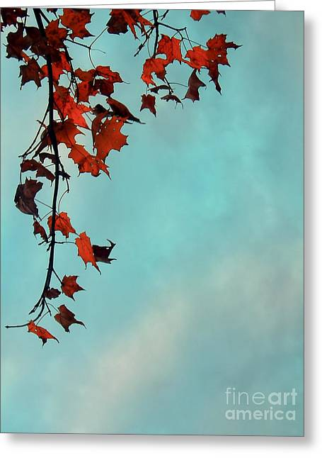 Maple Tree Branches Greeting Cards - Hot and Cold Greeting Card by Aimelle