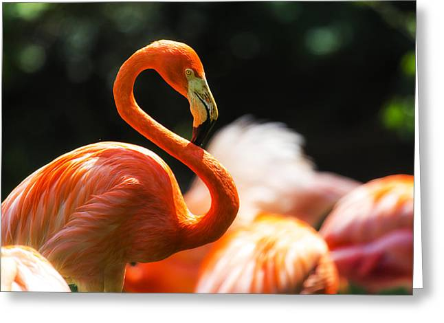 Tampa Greeting Cards - Hot Curves Greeting Card by Nicholas Evans