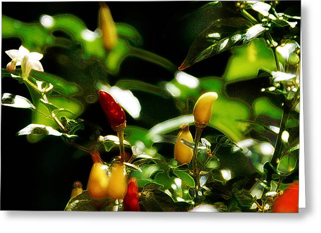 Hot Peppers Greeting Cards - Hot Pepper Greeting Card by Simone Hester