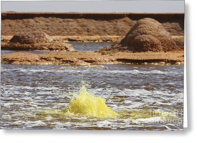 Sulphur Spring Greeting Cards - Hot Spring In Yellow Brine Lake, Dallol Greeting Card by Richard Roscoe