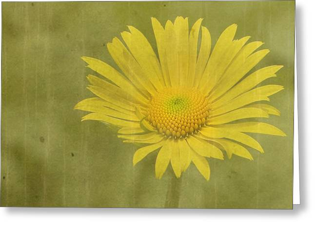 Daisy Greeting Cards - Hotty Greeting Card by Rebecca Cozart