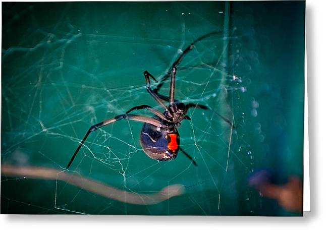 Black Widow Spider Greeting Cards - Hour Glass of Death Greeting Card by DigiArt Diaries by Vicky B Fuller