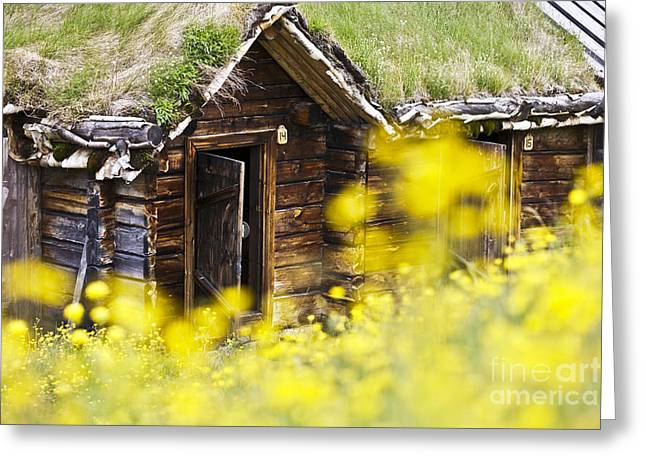 Frame House Photographs Greeting Cards - House behind Yellow Flowers Greeting Card by Heiko Koehrer-Wagner