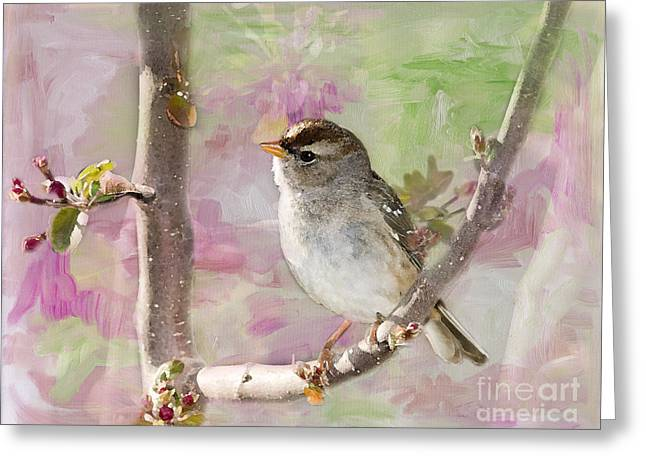 Sparrow Greeting Cards - House Sparrow Greeting Card by Betty LaRue