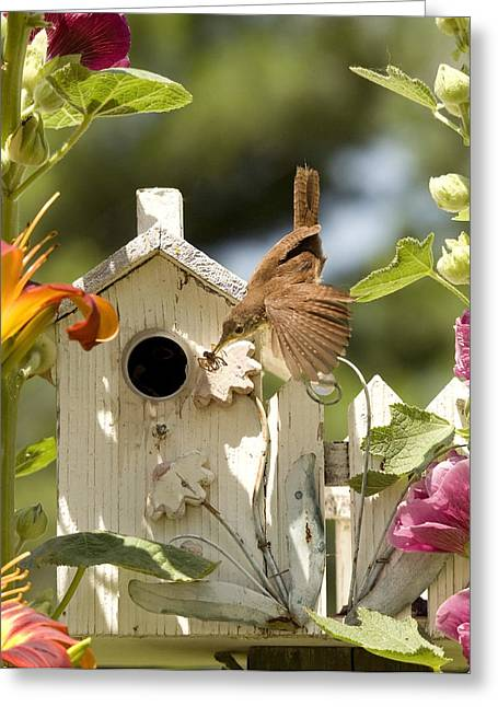Feeding Time Greeting Cards - House Wren Greeting Card by Donna Caplinger