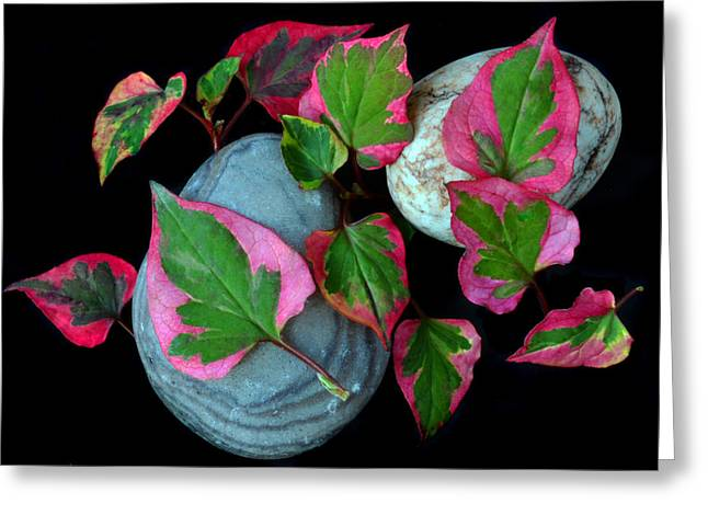 Ground Cover Greeting Cards - Houttuynia Cordata Chameleon Greeting Card by Terence Davis