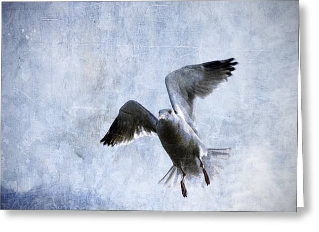 Gull Greeting Cards - Hovering Seagull Greeting Card by Carol Leigh