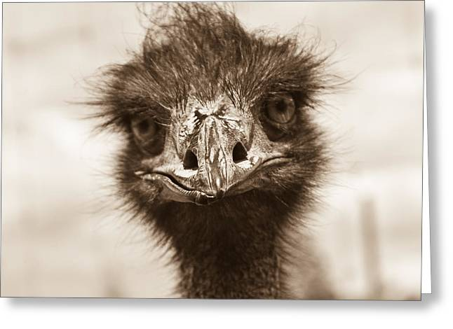 Ostrich Feathers Greeting Cards - How Do You Do Greeting Card by Douglas Barnett
