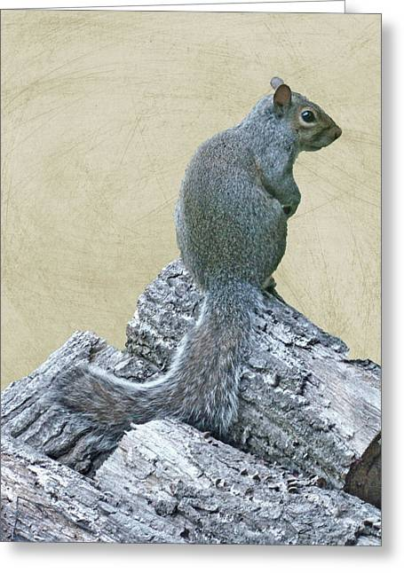 Sciurus Carolinensis Greeting Cards - How Long Do I Have To Face The Wall Mom Greeting Card by Mother Nature