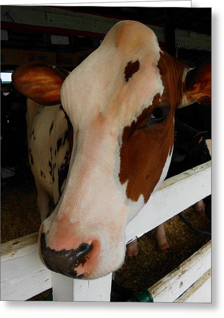 Moos Greeting Cards. Greeting Cards - How Now.... Greeting Card by Russ Loomis