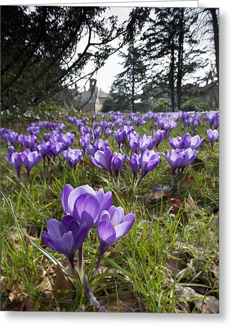 Ground Level Greeting Cards - Howick, Northumberland, England Purple Greeting Card by John Short