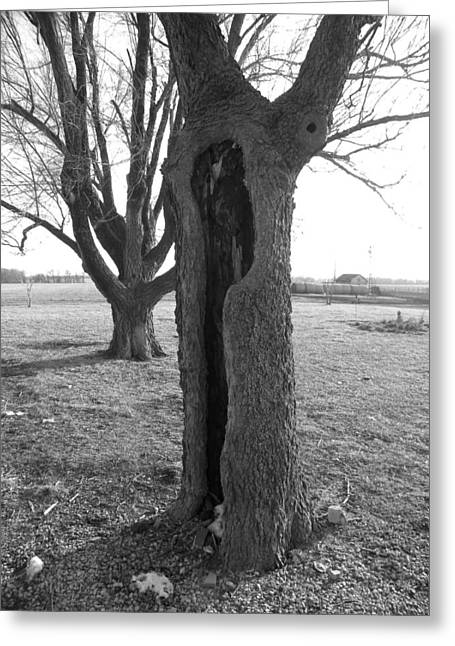 Photography Lightning Digital Art Greeting Cards - Howling Tree Greeting Card by Sheri Lauren Schmidt