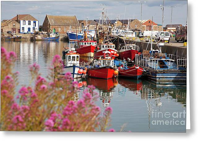 Navigate Greeting Cards - Howth harbour Greeting Card by Gabriela Insuratelu