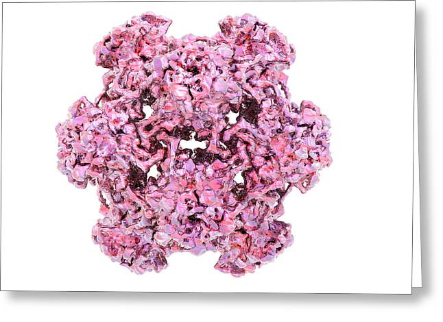 Microbiological Greeting Cards - Hpv L1 Surface Protein Greeting Card by Laguna Design
