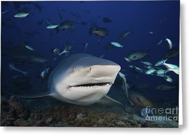 Undersea Photography Greeting Cards - Huge Bull Shark With Mouth Open, Fiji Greeting Card by Terry Moore