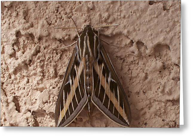 Art By Carl Deaville Greeting Cards - Huge Moth On Stucco In Las Vegas Greeting Card by Carl Deaville