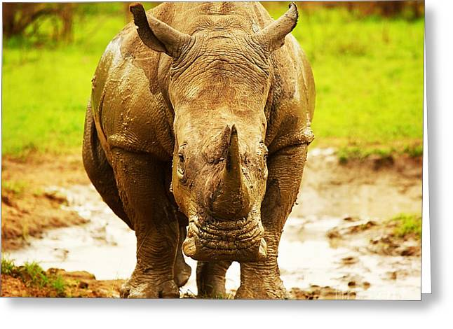 Mud Season Photographs Greeting Cards - Huge South African rhino Greeting Card by Anna Omelchenko