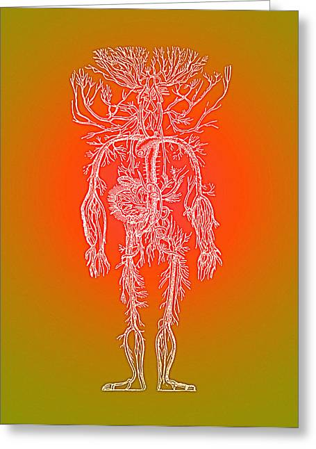 Historical Images Greeting Cards - Human Blood Vessels Greeting Card by Mehau Kulyk