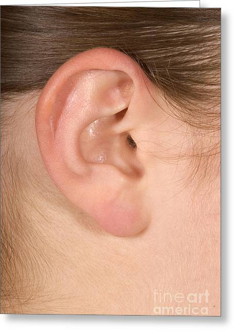 Human Ear Greeting Cards - Human Ear Greeting Card by Ted Kinsman