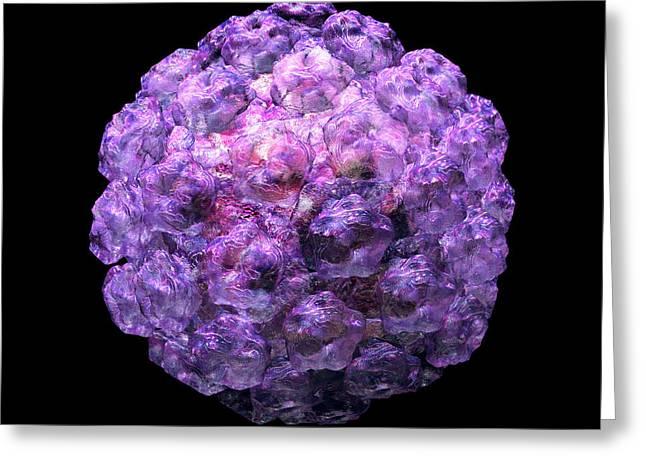 Human Papilloma Virus  10 Greeting Card by Russell Kightley