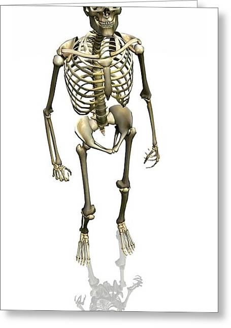 Dexterity Greeting Cards - Human Skeleton, Artwork Greeting Card by Friedrich Saurer