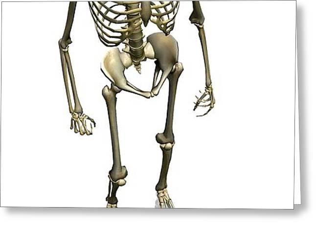 Human Skeleton, Artwork Greeting Card by Friedrich Saurer