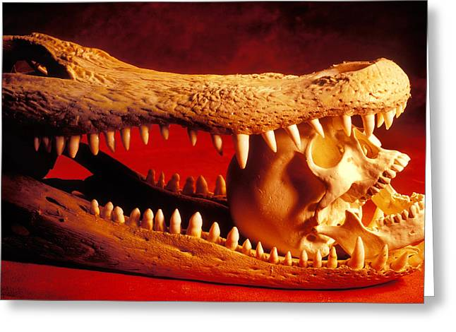 Human Skull Greeting Cards - Human skull  alligator skull Greeting Card by Garry Gay