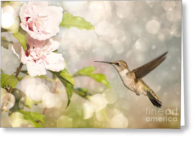 Hummer and Hibiscus Greeting Card by Sari ONeal