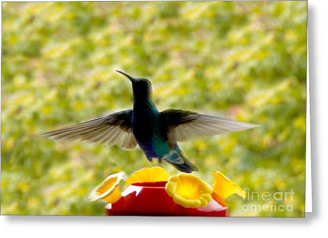 Flyer Greeting Cards - Hummer Series VI Greeting Card by Al Bourassa