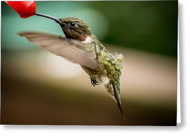 Hummers In The Garden Three Greeting Card by Michael Putnam