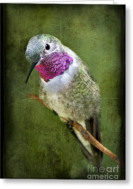 Eastern United States Greeting Cards - Humminbird At Rest Greeting Card by Susan Candelario
