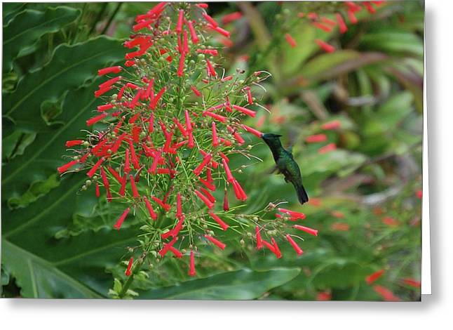 Crimson Tide Greeting Cards - Humming Bird and Red Flowers Greeting Card by Michael Thomas