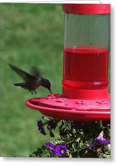 Feeding Birds Greeting Cards - Hummingbird 1 Greeting Card by Vijay Sharon Govender