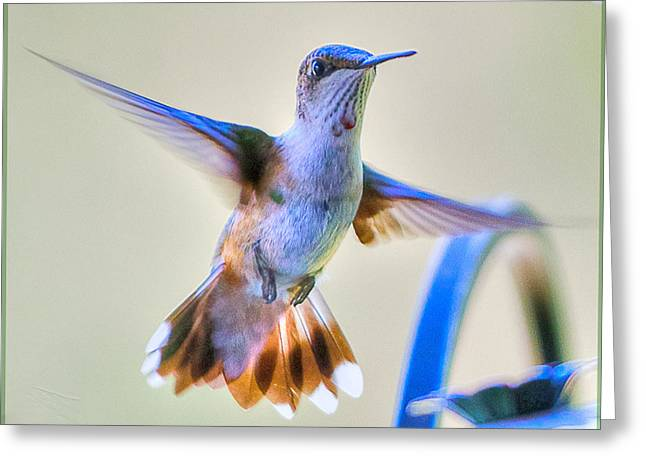 Ohio Pyrography Greeting Cards - Hummingbird at the Feeder Greeting Card by Shirley Tinkham