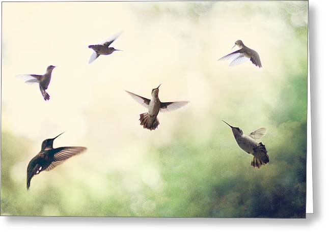 Hummingbirds Greeting Cards - Hummingbird Dance Greeting Card by Amy Tyler