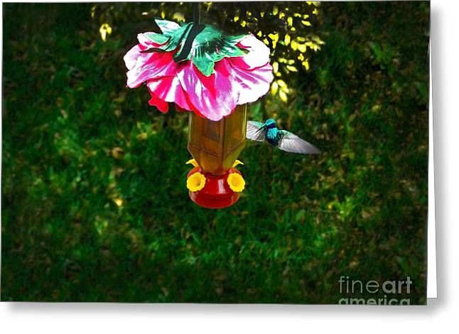 Hovering Greeting Cards - Hummingbird Early Visit Greeting Card by Al Bourassa